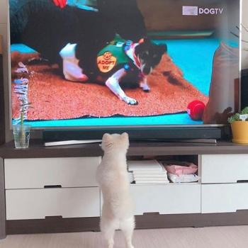 Dog TV