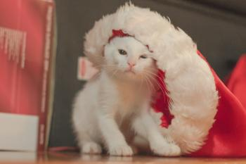 Animais no Natal