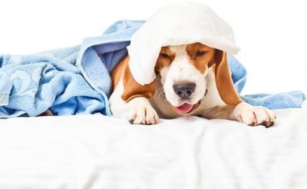 Cachorro com tosse