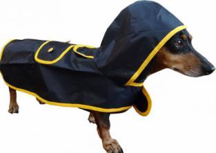 Cão de capa de chuva
