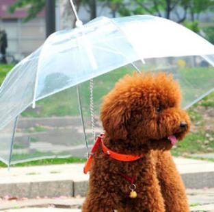 Cão com capa de chuva