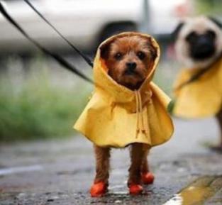 Cão com sapato