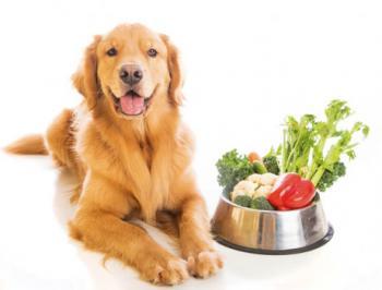 Pet comida