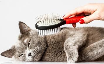 Gato banho