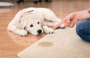 Cão sem bronca se errar