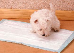 Cão no tapete higiênico