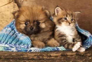 Gato e cão roupa