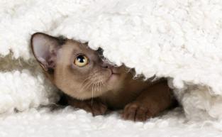 Gato hipotermina