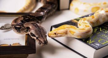 Serpentes domésticas