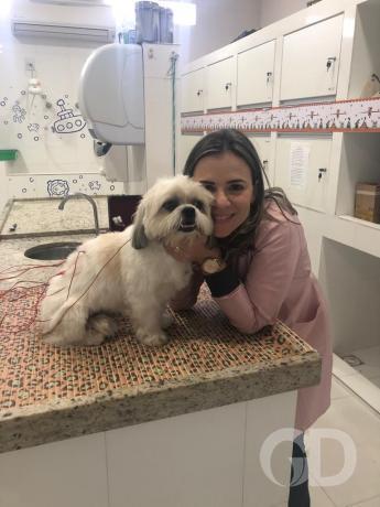 Mês de agosto veterinária Andréia Stragliotto