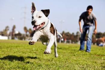Cachorro passeio sem coleira