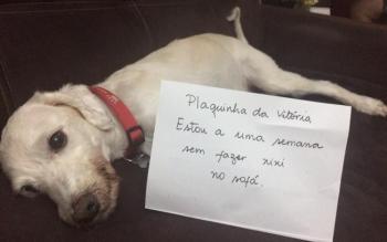 Cachorro placa