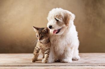 Cachorro e gato juntos