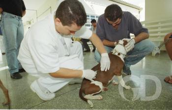 Vacinação cachorro