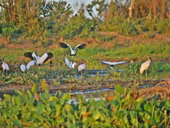 aves pantanal transpantaneira