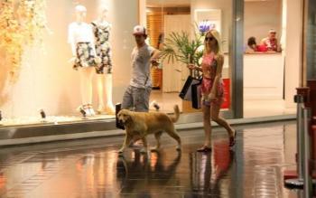 Cachorro no shopping