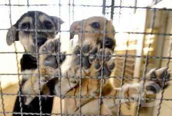 Pets presos