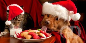 Cão Natal
