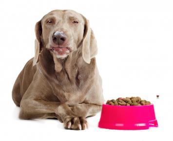 Cachorro alimentação