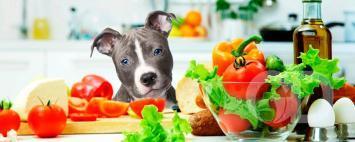 Cachorro comida