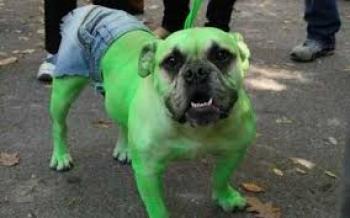 cachorro fantasia