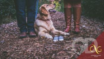 Casal na hora da separação e os animais de estimação