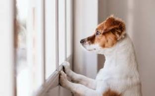 Cachorro ansiedade