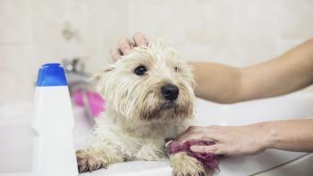 Cachorro no banho