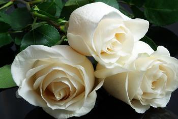 rosa branca simpatia amor