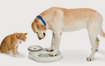 Cachorro e gato acima do peso