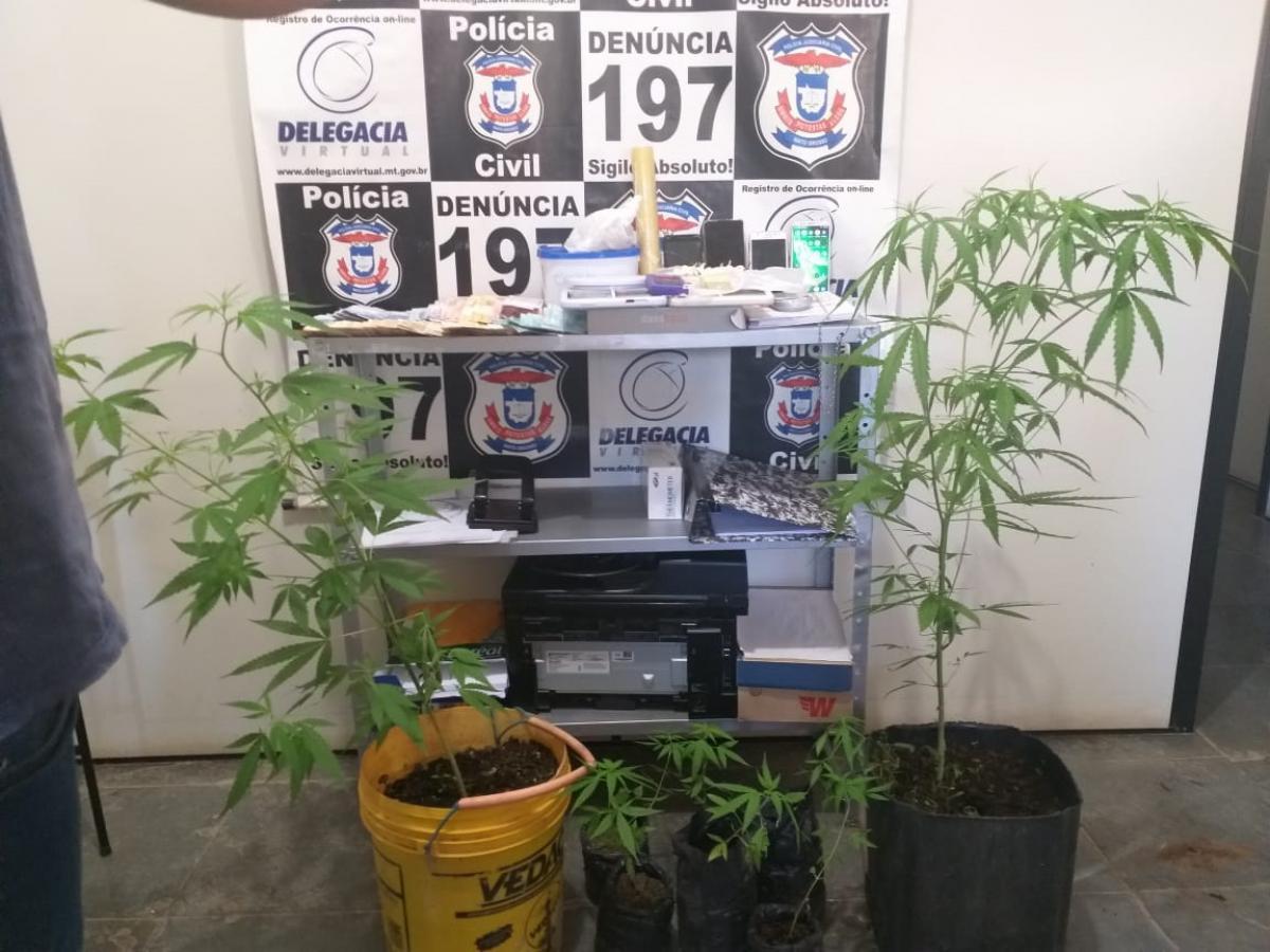 Polícia prende 5 traficantes com pés de maconha, LSD e pasta base no interior