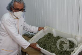 Horto Florestal / Plantas terapias Remédios / Homeopatia